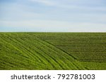 field of green grass in early... | Shutterstock . vector #792781003