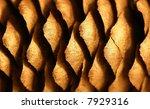 Golden Cone