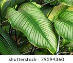 green maple leaf | Shutterstock . vector #79294360