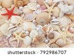 Seashells  Pearls And...
