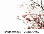 flower nature with copy space... | Shutterstock . vector #793009957