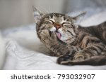 pet cleaning  cute tabby cat... | Shutterstock . vector #793032907