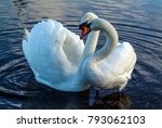 the loving courtship of swans... | Shutterstock . vector #793062103