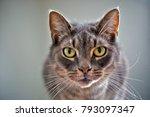 Intense Looking Cat