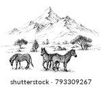 zebras in  wilderness sketch... | Shutterstock .eps vector #793309267