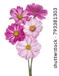studio shot of multicolored...   Shutterstock . vector #793381303