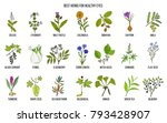 best medicinal herbs for... | Shutterstock .eps vector #793428907