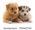 Stock photo two cute puppies isolated on a white background 793442743