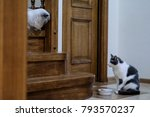 two cats sit down on stairs | Shutterstock . vector #793570237