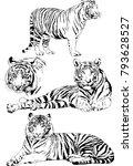 vector drawings sketches... | Shutterstock .eps vector #793628527
