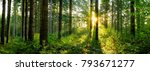 panorama of a forest at sunrise | Shutterstock . vector #793671277