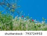 landscape nature  flowers of... | Shutterstock . vector #793724953
