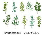 bouquet greenery set isolated... | Shutterstock .eps vector #793759273