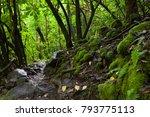 a footpath through the... | Shutterstock . vector #793775113
