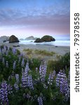 Lupine And Sea Stacks Along Th...