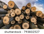 the ecological business of the... | Shutterstock . vector #793832527