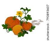 ripe pumpkin isolated on white...   Shutterstock .eps vector #793893607