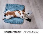 the dog uses the phone and... | Shutterstock . vector #793916917