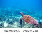 sea turtle in water | Shutterstock . vector #793921753