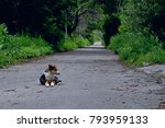 Dog Lost In Forest. Road And...