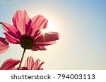 high resolution low angle close ...   Shutterstock . vector #794003113