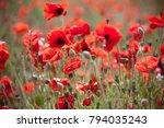 red poppies in field | Shutterstock . vector #794035243