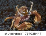 lembeh straits   indonesia  ... | Shutterstock . vector #794038447