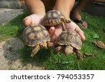 baby tortoise on the hands of... | Shutterstock . vector #794053357
