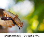 ants carry leg bug to nest | Shutterstock . vector #794061793