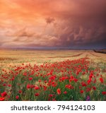 meadow of wheat and poppy.... | Shutterstock . vector #794124103