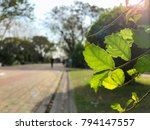 view of park and garden with... | Shutterstock . vector #794147557
