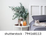 Eucalyptus in the interior, in the bedroom by the bed. The cat on the bed breed Neva Masquerade. On the table decorative orange chips, cones, candles
