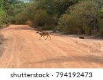 axis deer in yala national park ... | Shutterstock . vector #794192473