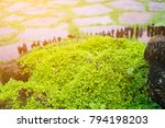 hot springs in national park... | Shutterstock . vector #794198203