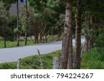 asphalt road in the middle of a ... | Shutterstock . vector #794224267