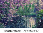 pink flamingos in the park with ... | Shutterstock . vector #794250547