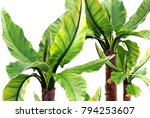 3d illustration tropical plants ... | Shutterstock . vector #794253607