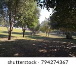 trees in a park | Shutterstock . vector #794274367