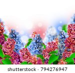 amazing spring lilac on a... | Shutterstock . vector #794276947