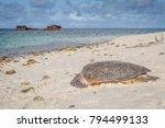 green sea turtle on the beach ... | Shutterstock . vector #794499133