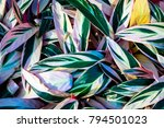 pattern of green leaves and... | Shutterstock . vector #794501023