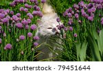 white cat sniffing a flower in... | Shutterstock . vector #79451644