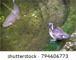 Small photo of Fish and waterfowl are in constant contact and peacefully get along with each other.