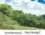 beautiful vibrant background... | Shutterstock . vector #794794987