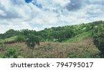 beautiful vibrant background... | Shutterstock . vector #794795017