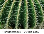 cactus thorn texture background ... | Shutterstock . vector #794851357