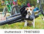 dog in helmet sitting on...   Shutterstock . vector #794876803