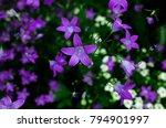 Small Purple Bell Flowers In...