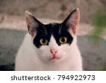 young crazy surprised cat make... | Shutterstock . vector #794922973