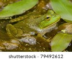 bull frog among bubbles and... | Shutterstock . vector #79492612